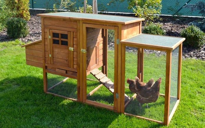 Comment choisir son habitat pour les poules?
