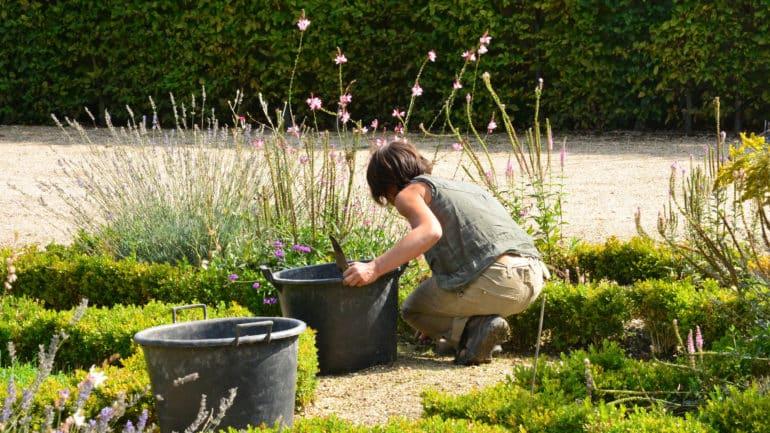Comment cultiver le millepertuis ?