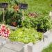 Quelle est la meilleure technique pour cultiver dans un petit jardin?