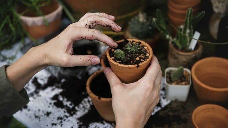 Comment utiliser le soufre dans le jardin?