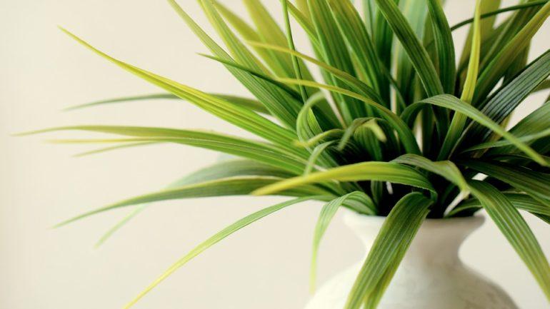 Plantes dépolluantes: utilité et exemples de plantes