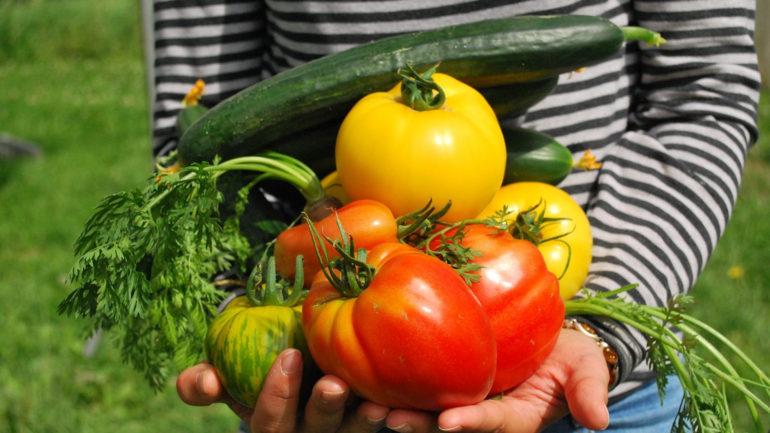 Aidez vos plantes et vos légumes à grandir sereinement