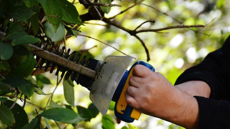 Comment bien choisir ses outils de jardinage