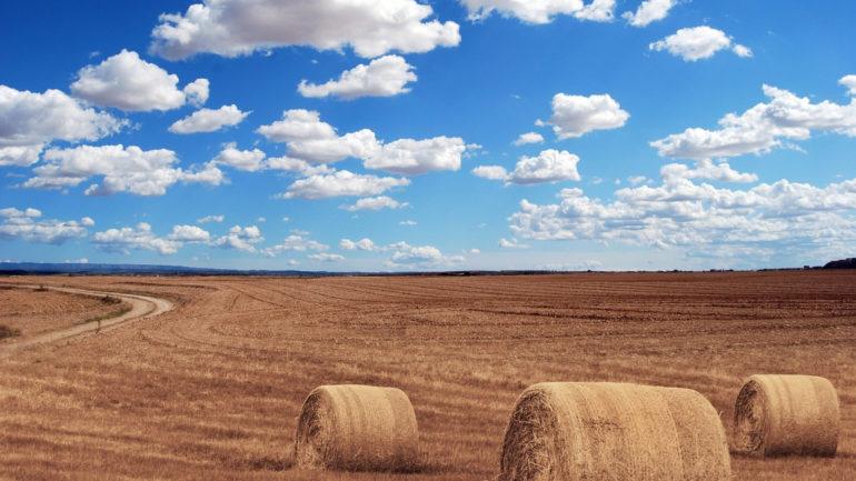 Quand utiliser une dent de cultivateur pour une préparation optimale du sol ?