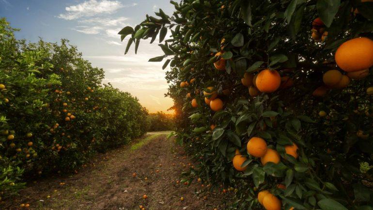 Comment mesurer la qualité des fruits de la production en vergers ?